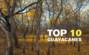 The 10 best pictures of the Guayacanes of Ecuador 2018