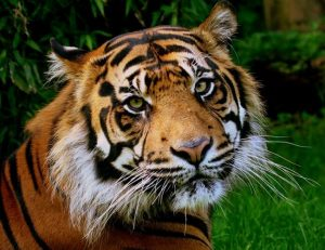 19 critically endangered species