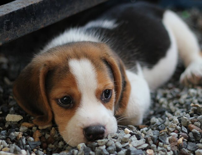 Facebook prohibits the sale of pets on its platform