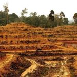 Palm oil, deforestation and what you did not know about its production